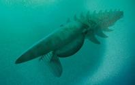 Điếng hồn trước con tôm khủng dài 1,8 m