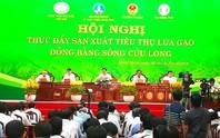 Tìm giải pháp giải cứu lúa gạo cho ĐBSCL