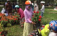 30 Tết, hoa kiểng rớt giá thê thảm nhưng ít bị đập bỏ
