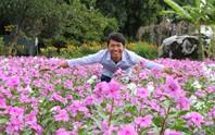 Bất ngờ với vẻ đẹp của hoa dừa cạn nở rực rỡ đón Xuân