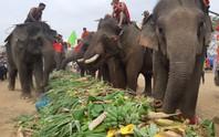Hàng ngàn người đội nắng xem voi dự tiệc buffet, đá bóng, chạy đua