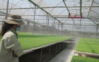 Sức hút của nông nghiệp Việt