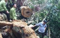 Cận cảnh phá rừng trong vùng lõi Khu bảo tồn thiên nhiên Ngọc Sơn - Ngổ Luông