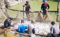 Trung Quốc chuộng mua cá tra qua sàn thương mại điện tử