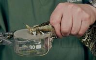 Hy vọng cho nạn nhân bị rắn độc cắn