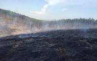 Nắng nóng làm cháy nhiều ha rừng kinh tế