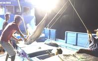 [VIDEO] - Một triệu lá cờ Tổ quốc cùng ngư dân bám biển: Cuộc chiến với cá ngừ đại dương