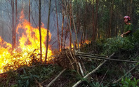 Rừng khắp nơi ở Thừa Thiên Huế đang cháy ngùn ngụt
