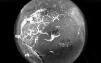 Phát hiện đàn trai hóa thạch ngậm ngọc ngoài hành tinh