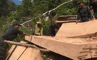 Vụ điều công an khác địa bàn đi bắt gỗ lậu: Thu giữ thêm 500 mét khối gỗ