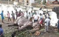 Con voi gầy trơ xương qua đời sau 70 năm làm nô lệ