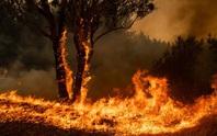 Úc: Cháy rừng hai bang nhập một, siêu hỏa ngục hình thành