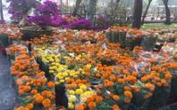 Chợ hoa Tết ở TP HCM đồng loạt mở cửa sáng 23 tháng Chạp