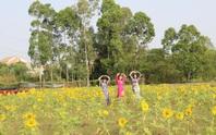 Về Cao Lãnh ngắm cánh đồng hoa rộng hơn 20.000 m2