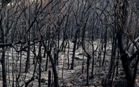 Rừng ở Úc nguy cơ cháy trở lại do nắng nóng và gió lớn