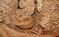 Bí ẩn người đàn ông hóa thạch trong hầm mỏ: khác loài, 130.000 tuổi