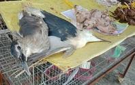 Mua bán động vật hoang dã: Đừng trông chờ vào sự tự giác, phải phạt tù!