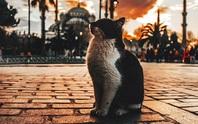 Đến thành phố của mèo, nở nụ cười vui vẻ