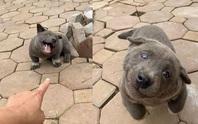 Chó Dúi ở Việt Nam gây bão mạng xã hội quốc tế