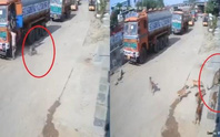 Video: Báo vồ hụt người, bị đàn chó dồn tới đường cùng