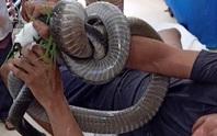 Nọc độc rắn hổ mang chúa 4,6kg ở núi Bà Đen biến mất khỏi người nạn nhân cách nào?