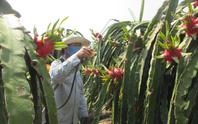 Nông dân giảm sử dụng, đại gia thuốc bảo vệ thực vật hụt thu hơn 50%