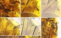 Kinh ngạc viên đá quý chứa sinh vật không đầu 99 triệu tuổi