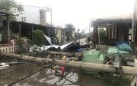 Hàng trăm cột điện gãy trong bão số 5: Do cây xanh ngã đè