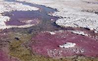 Choáng váng sinh vật 3,5 tỉ tuổi thở bằng… thạch tín, không cần oxy