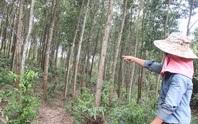 Vụ xã buộc dân nộp tiền để trả nợ quán xá: Đất rừng vào nhà cán bộ?
