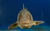 Sinh vật tái sinh sau 66 triệu năm tuyệt chủng: phát hiện phiên bản thủy quái