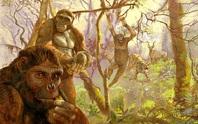Sốc: loài 4,4 triệu tuổi biến đổi nhảy vọt từ tinh tinh thành con người