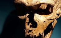 Một loài tuyệt chủng từng biết nghe và nói như người hiện đại