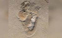 Phát hiện bóng ma sinh vật giống con người, hơn 6 triệu tuổi