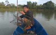 Sau vụ chết bất thường, cua biển ngon nhất miền Tây giảm 100.000 đồng/kg