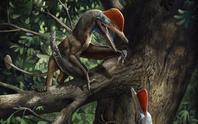Quái thú bay kỷ Jura mang trên cơ thể thứ giống con người