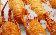 Quá phụ thuộc thị trường Trung Quốc, 11.000 tấn tôm hùm Úc bơ vơ