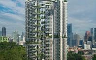 Nhìn ra thế giới: Singapore phát triển khu vườn thẳng đứng