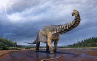 Phát hiện hóa thạch gây sốc của loài siêu quái thú nặng 74 tấn