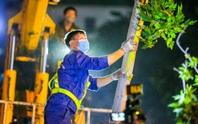 CLIP: Hà Nội di dời hàng cây phong lá đỏ trong đêm