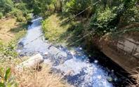 Hãy cứu lấy sông rạch Đông Nam Bộ!