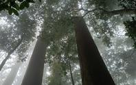 Thăm rừng đặc sản ở xứ Thanh
