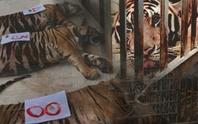 Ai gây chết 8 con hổ, đừng ậm ừ nữa!