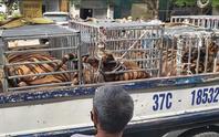Phát hiện 17 con hổ lớn nuôi nhốt trái phép trong khu dân cư