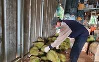 Chính quyền huyện gỡ vướng vụ tạm dừng mua bán sầu riêng, bơ khi đang thu hoạch