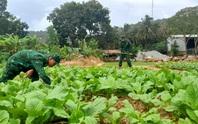 Biên phòng đảo Thổ Châu trồng rau, nuôi heo tặng dân nghèo