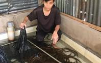 Chuyện cô Phương nuôi lươn sạch