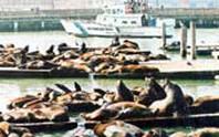 Trở thành điểm du lịch nhờ... hải cẩu