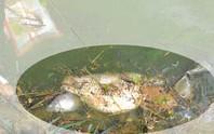 Đà Lạt: Rác, cá chết gây ô nhiễm hồ Xuân Hương