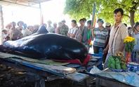 Cá voi 3 m trôi dạt vào khu vực biển Vạn Lương